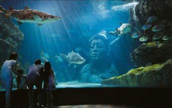 עולם חיי המים של בנגקוק SEA LIFE Bangkok Ocean World