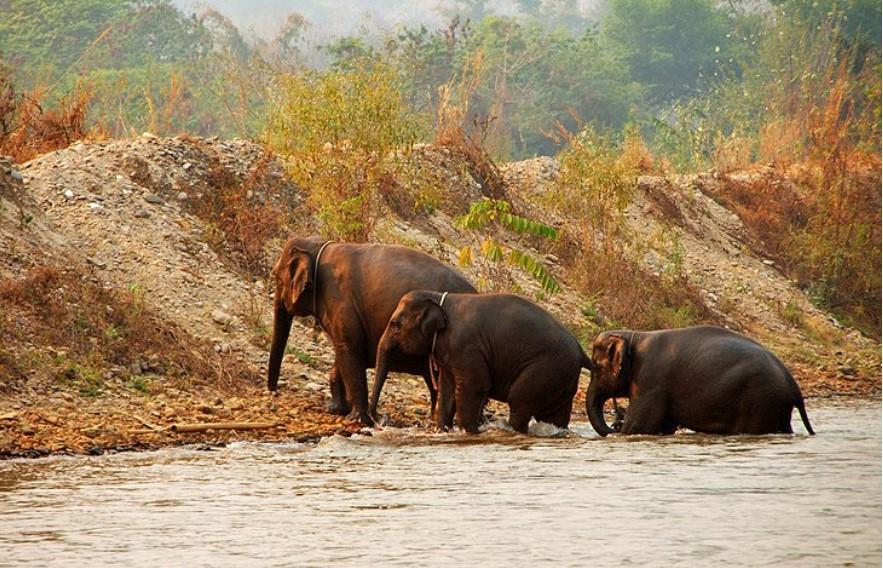 פארק הטבע פילים