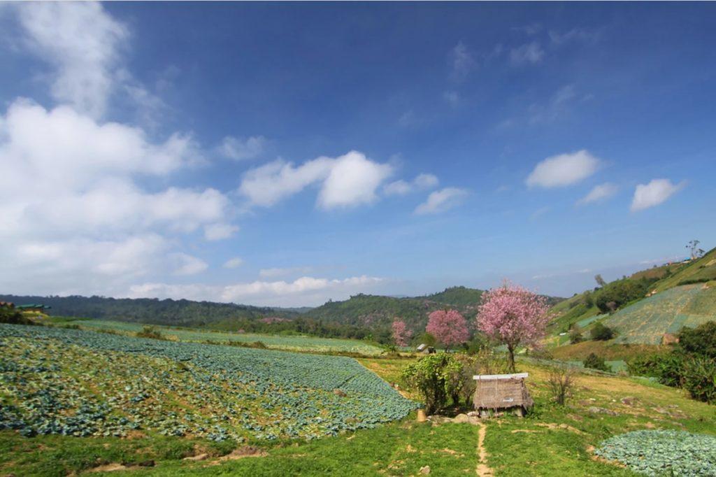 פטשאבון תאילנד
