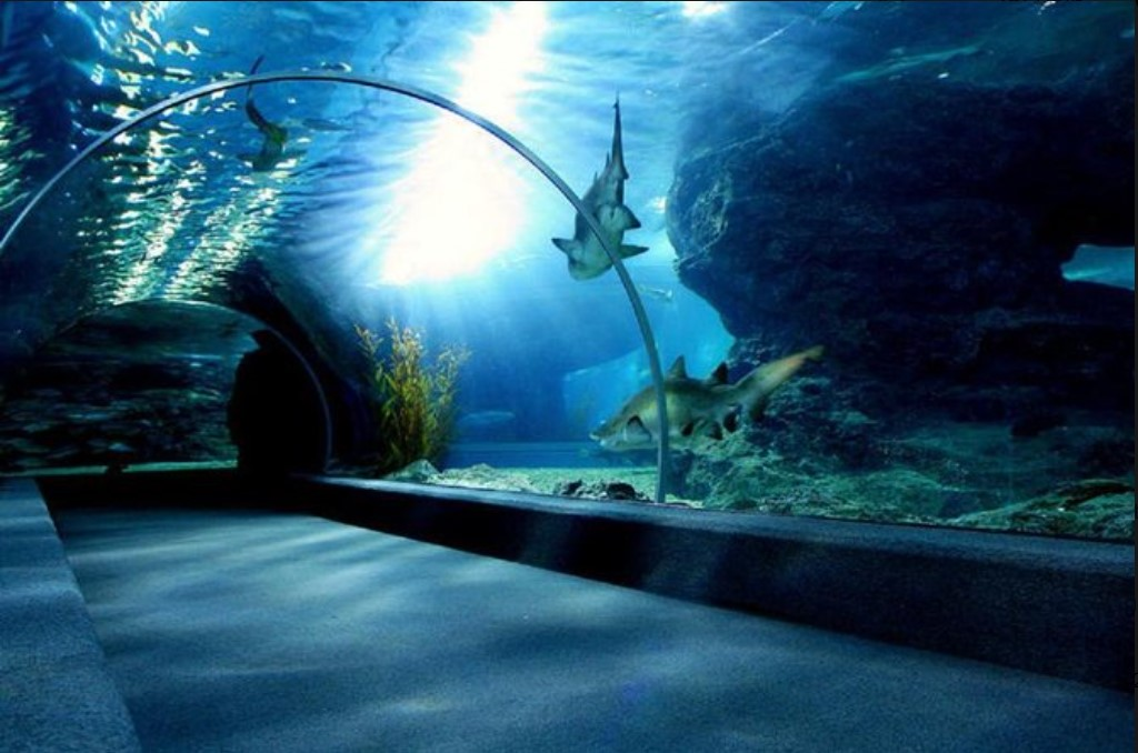 SEA LIFE בנגקוק עולם האוקיאנוס